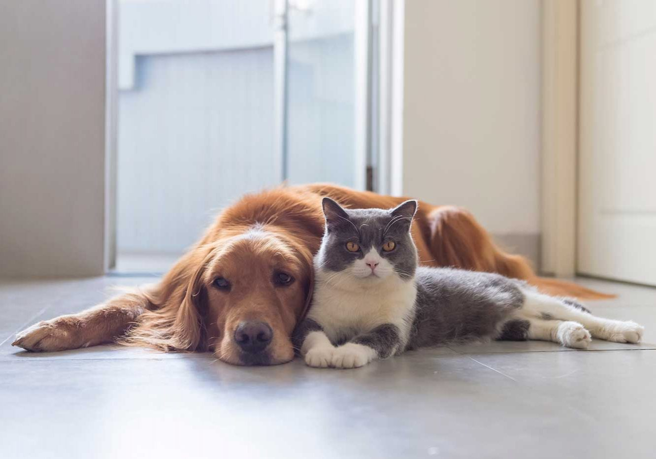 home-cat-dog